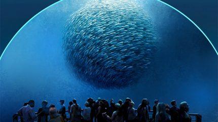 national geographic fish school