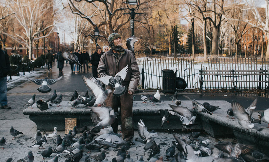 washington square park pigeons