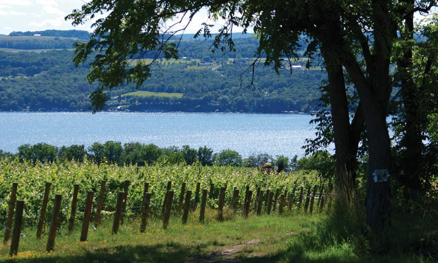 New York State Viticulture