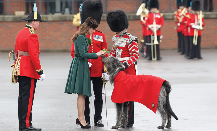 princess meets wolfhound